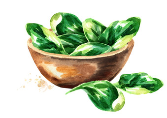 Bowl with Spinach. Watercolor hand drawn illustration, isolated on white background