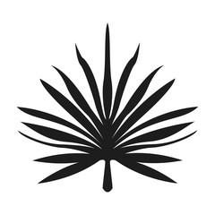 nature leave foliage botanical image isolated on white background vector illustration