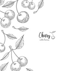 Hand drawn illustrations of cherries isolated on white background. Berries engraved style illustration. Detailed frame with cherry. Applicable for menu, flyer, label, poster, print, packaging.