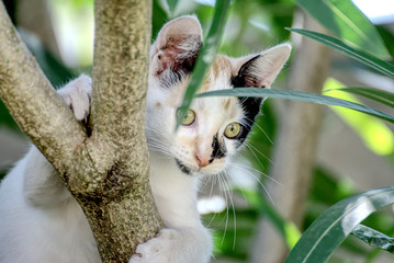 Cute young cat climbing on a tree in summer