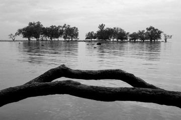 Trees on the sea, abstract black and white photo.