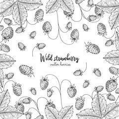 Hand drawn illustration of wild strawberry isolated on white background. Berries engraved style illustration. Detailed frame with berries. Applicable for menu, flyer, label, poster, print, packaging.