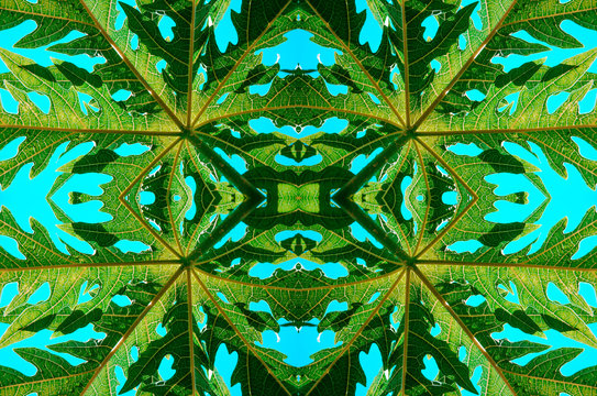 Nature Green Texture Symmetry