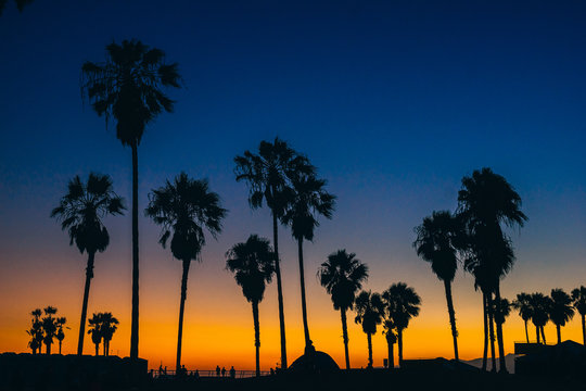 View of silhouette palm trees against blue sky during sunset