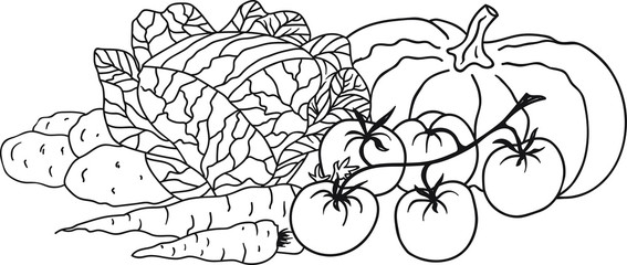 Hand Drawn Doodle Sketch Line Art Vector Illustration with Composition of Vegetables. Cabbage Pumpkin Carrots Potatoes Tomatoes. Black Outline Design Element Template.