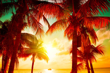 Printed roller blinds Tropical beach Sunset beach with tropical palm tree over beautiful sky. Palms and beautiful sky background. Tourism, vacation concept backdrop. Palms silhouettes over orange sun