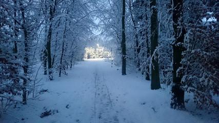 verschneiter Waldweg in der Abenddämmerung