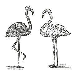Flamingo. Detailed hand drawn birds with abstract patterns on isolated background. Design for spiritual relaxation for adults. Black and white illustration for coloring. Print for t-shirts. Zentangle