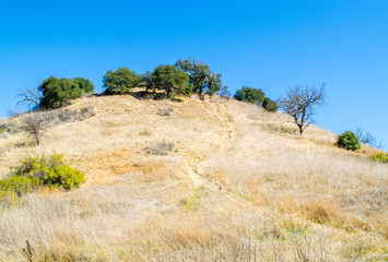 steep grass covered hill with rugged dirt path leading up to green trees in the Santa Monica Mountains of California