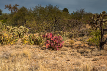 Desert landscape with red cactus