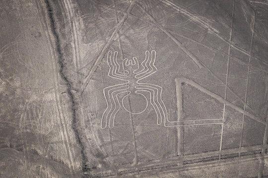 Nazca Lines - The Spider - Landmark of Peru.