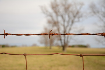 rusty old barbed wire fence. shallow depth of field trees for the background