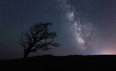 One tree hill, under the Galaxy
