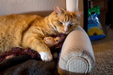 2/24/2018-Spanish Fork,UT/USA- orange cat cuddlikng with adorable sock monkey