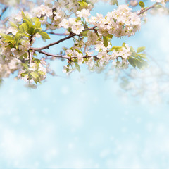 Soft Wallpaper With blossom plum tree