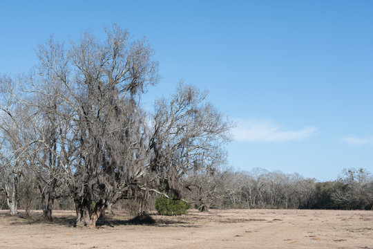 Southern pasture in winter background