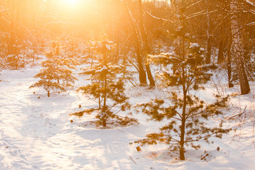Photo of tree in snowy forest on winter day