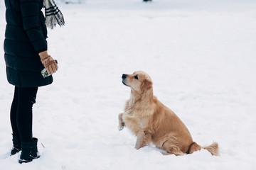 Photo of girl and labrador in winter park for walk