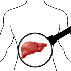 silhouette of the human body liver under a magnifying glass
