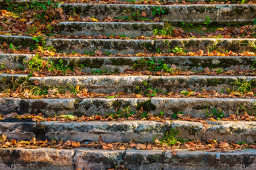 Foto op Plexiglas Trappen Dilapidated stone stairs covered with grass and dry leaves in sunny autumn day closeup