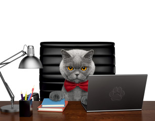 Cute cat manager is doing some work on the computer. Isolated on white