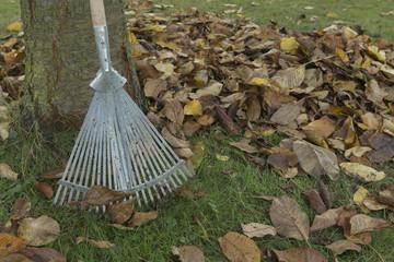 autumn foliage with a rake