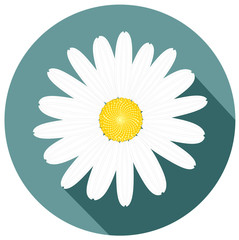 beautiful white daisy flower flat design. for greeting cards and invitations of wedding birthday mother's day and other seasonal holiday vector eps 10