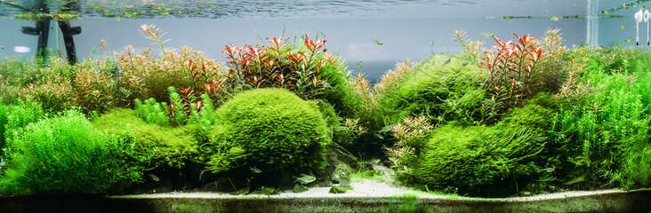Aquarium algae, elements of flora in fishbowl