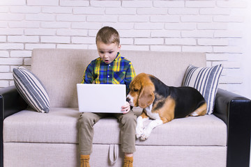 funny boy playing a laptop with a dog on the couch