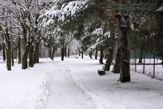 A footpath in the park under wintry trees