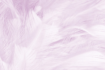 Violet color trends bird feather texture background