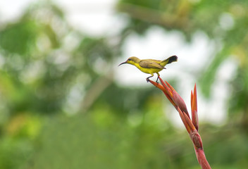 bird, nature, hummingbird, animal, wildlife, green, flower, wild, branch, yellow, colorful, beak, tropical, wings, sunbird, dragonfly, birds, spring, flying, forest, red, kingfisher, tree, small, inse