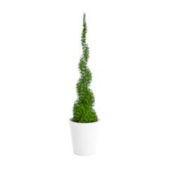 Decorative thuja plant planted white ceramic pot isolated on white background. 3D Rendering, Illustration.