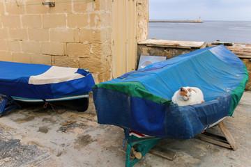 Katze, Boot, Valletta, Malta