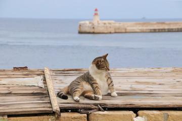 Katze, Valletta, Malta, Fort Rinella