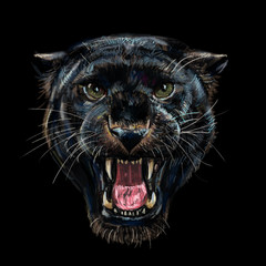 Roaring black panther on black background