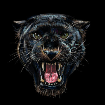 Roaring black panther on black.