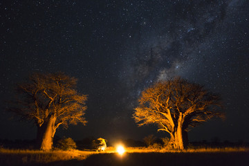 Foto op Canvas Baobab Camping under the milky way between baobab's