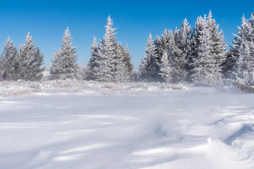 Winter landscape of snow covered field and small pine trees forest in background
