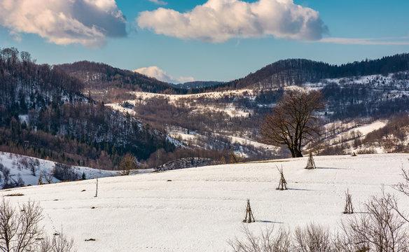 lonely tree on snowy hillside. beautiful winter scenery in mountainous rural area