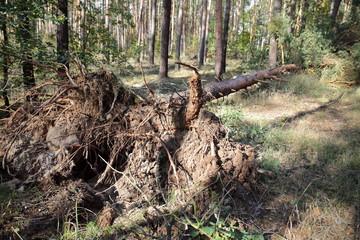 Sturmschaden in der Dübener Heide, Nordsachsen