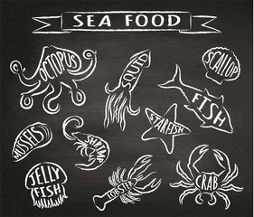 Seafood chalk contour  vector illustrations on blackboard, elements for restaurant menu design, decor, label. Chalk textured grunge contours of sea animals with names.