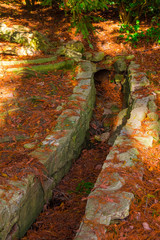 The drain in the ground with many dry leaves in Arboretum in sunny autumn day, Sochi, Russia