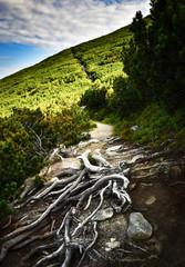 hiking trail through the mountain pine