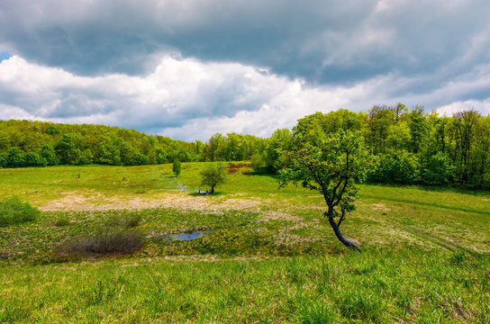 tree on a hump over the grassy meadow among the forest. beautiful nature scenery on a cloudy summer day. people have picnic under the tree in the middle