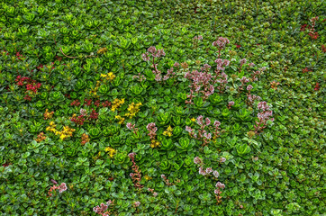 Green roof covered with sedum, predominantly green but with some red, yellow and purple flowers.