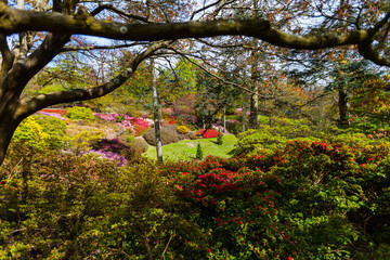 Blooming rododendrons surrounded by trees in a park with a cloudy sky in the background