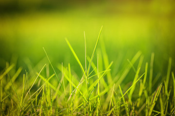 Green grass under the bright sun.