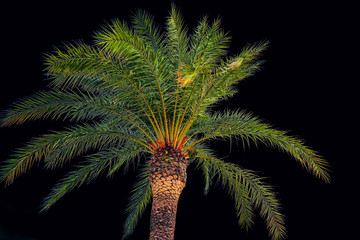 Crown of palm trees made of coconut isolated on a black background