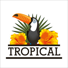 Wall Mural - toucan and hibiscus natural tropical flower leaves white background vector illustration